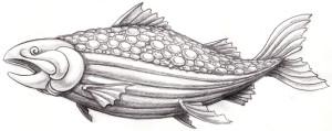 ferryfish shaded